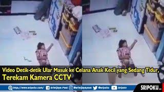 Video Detik detik Ular Masuk ke Celana Anak Kecil yang Sedang Tidur, Terekam Kamera CCTV