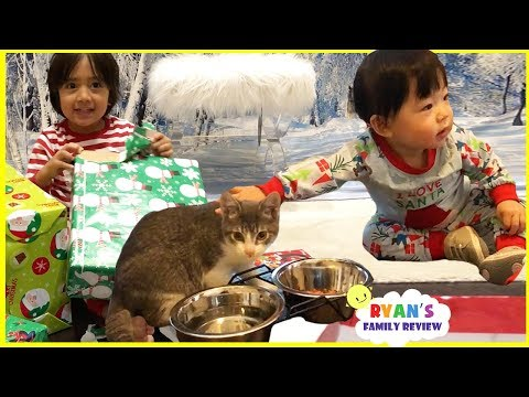 Meet our new cats and Ryan open presents on Christmas Morning 2017