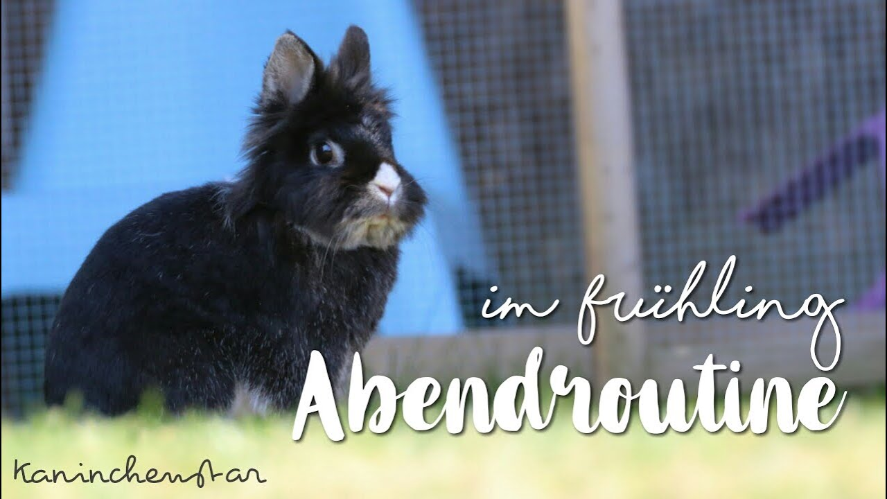 ABENDROUTINE im Frühling 🌸🐰 bei den Kaninchen   Kaninchenstar