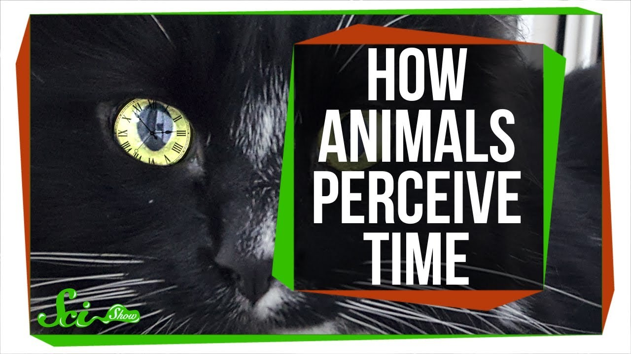 For Some Animals, The World Moves in Slow-Motion