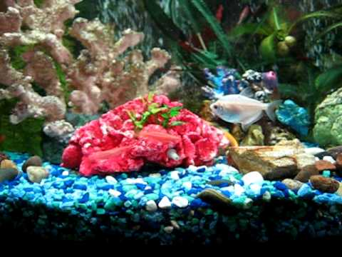 Fluorescent GLOFISH CAUGHT IN the ACT (MUST SEE) Spawning ...