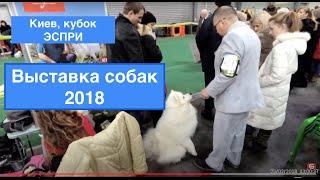 Выставка собак Киев 2018 в ВЦ Экспоплаза. Соревнования на кубок Эспри