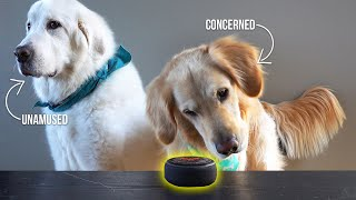Gambar cover Dogs React to Amazon Alexa