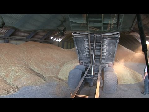 Wheat Harvest - Full Process - Harvest 2014