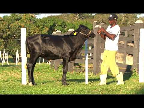 LOTE 30   7011BR