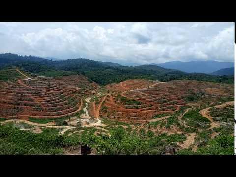 Raub 260 Acres Durian Plantation Land