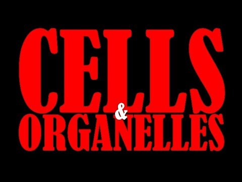Stray - Cells and Organelles