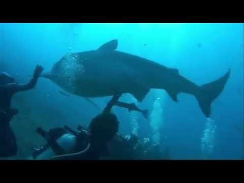 Jaws and Paws - Anjali World Charity - Marine and Wildlife Conservation