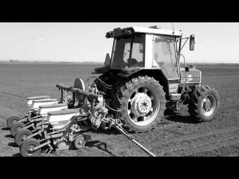 Setva kukuruza Kuzmin 2017