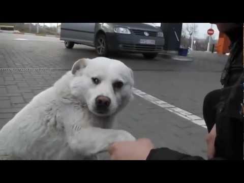 Friendly stray dog