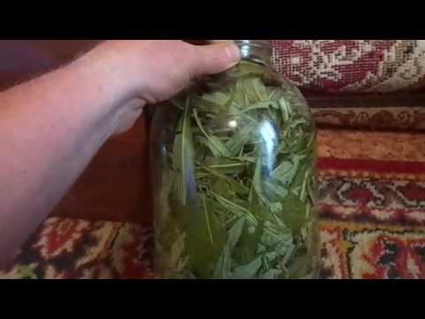 Как заготовить иван чай в домашних