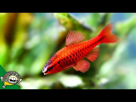 Unheated Aquarium Fish Foom Tour - Aquarium Co-Op