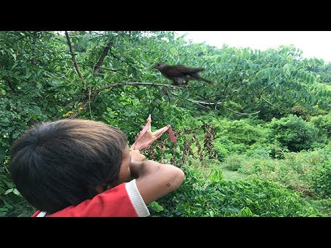 Amazing Slingshot Traditional-Boy Shot Many Birds In His Village