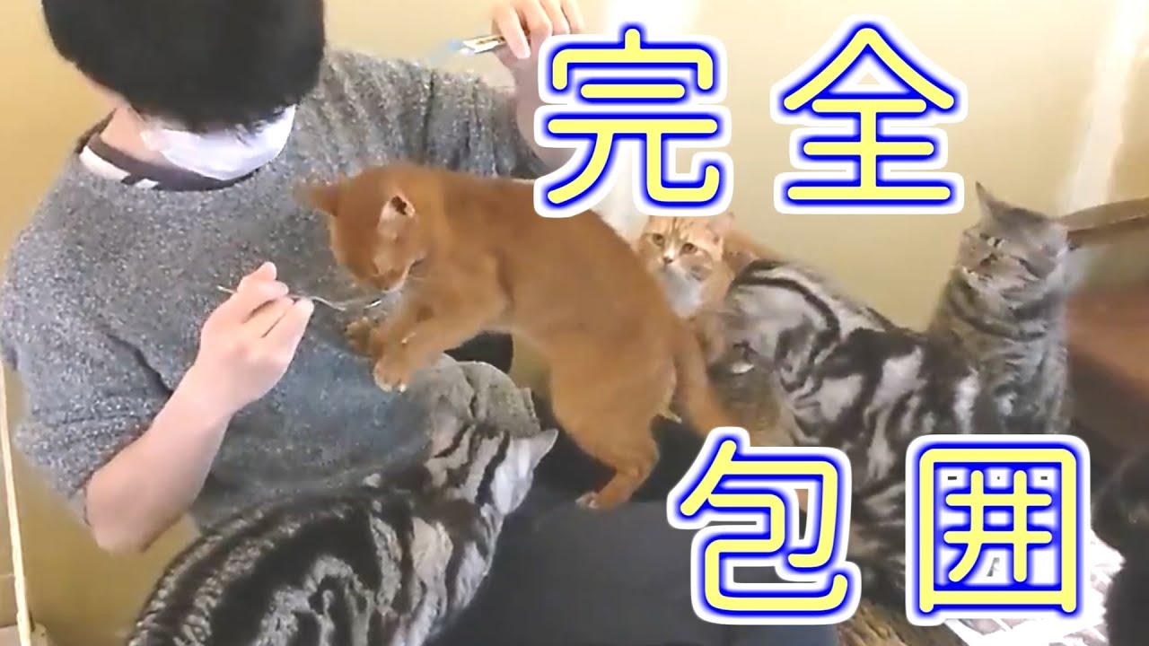 【フクロウコーヒー】カメさん可愛かった!!!!【猫カフェ】