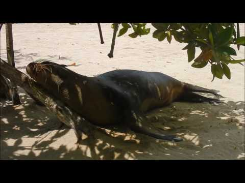 University of Vermont-  Ecology of the Galápagos 2017