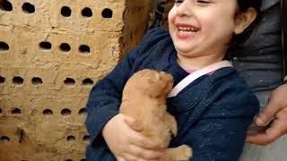 الطفله الى خلت الناس تثق وتحب الكلاب / كوكو# اجرئ طفله فى مصر