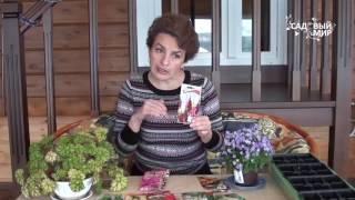Что посеять в феврале  Часть 1  Какие цветы сеять в феврале