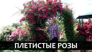 /dir/sadovodstvo/roza_pletistaja_sorta_i_osobennosti_pletistykh_roz/20-1-0-541