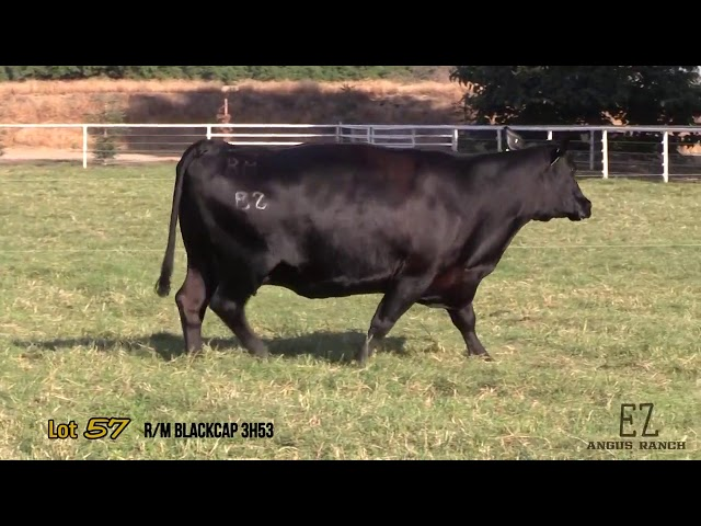 EZ Angus Ranch Lot 57