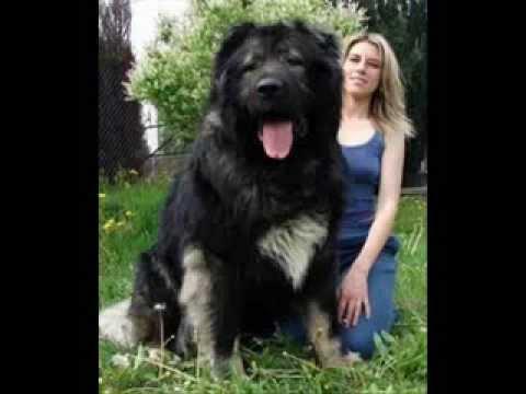 Marana Barking Dog