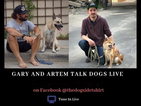 gary-and-artem-talk-dogs-episode-13---the-walk...is-it-a-struggle-for-you?