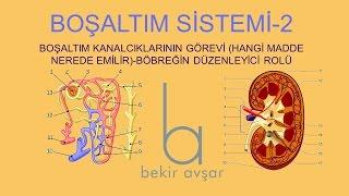 YKS BOŞALTIM SİSTEMİ 2