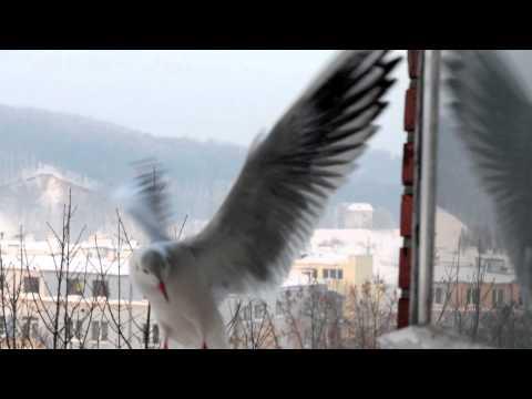 Franciszkańskim okiem 14 - Braciszkowie skrzydlaci