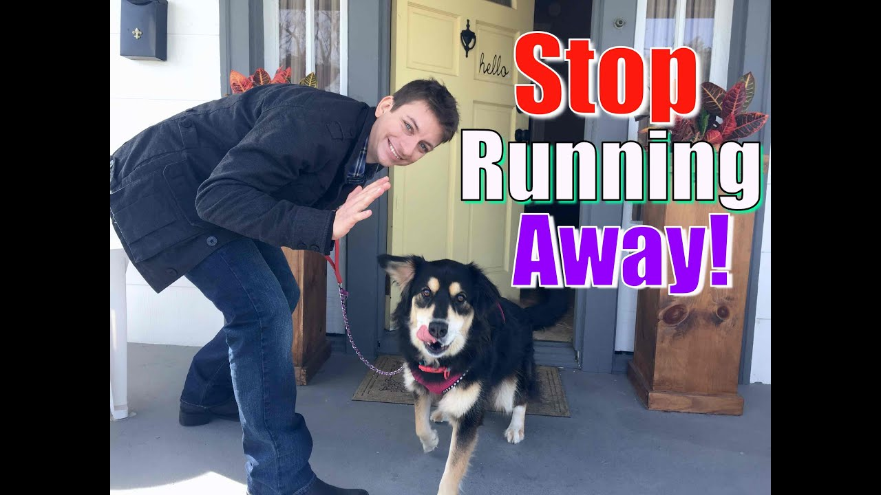 How To Stop Your Dog From Running Out Of The Front Door Stay While