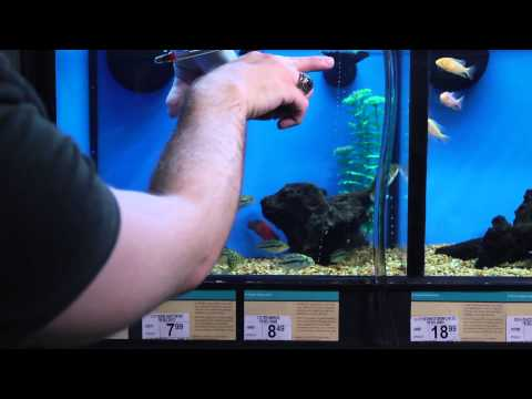 How to Clean Waste in a Fish Tank : Aquariums & Fish Care