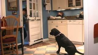 Teaching Your Dog To Not Run Through An Open Door