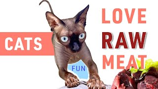 Raw Cat Food or Cat's reaction to RAW Meat