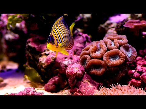 Documentaire // Recifs coralliens // ☆ La beauté sous-marine ☆【FR】