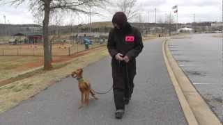 Dog Training: How To Control Teach Fetch And Give