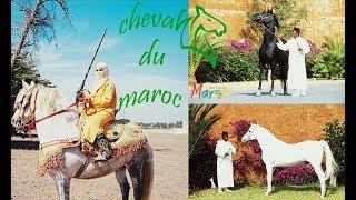Infos #Tourisme Maroc : #Cheval du #Maroc