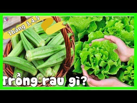 """Tháng 3,4,5: Trồng rau gì vừa hợp mùa vừa có rau ăn """"đã miệng"""" từ xuân sang hè - Quỳnh Kool"""