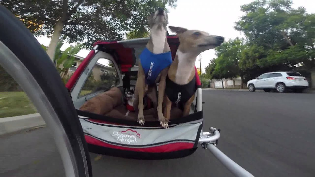 My Dogs Bike Trailer Youtube