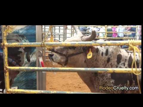 SHARK Exposes Cruel Mexican Rodeo