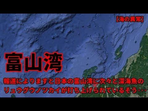 富山湾に次々と深海魚のリュウグウノツカイが打ち上げられている