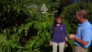 Gambar cover How to Have Healthy and Productive  Fruit Trees in the Home Landscape