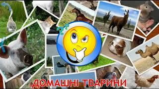 звуки животных для малышей Мультик Про Домашних Животных Для Детей На Укр звук животных для детей,
