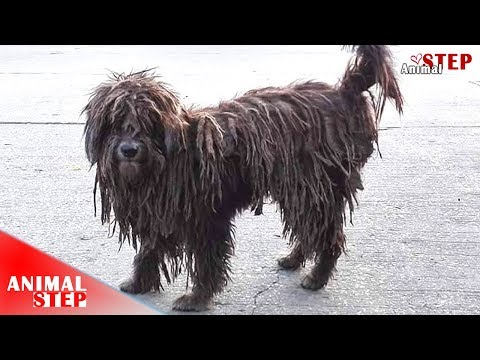 Street Dog with Severely Matted Fur Gets Amazing Makeover