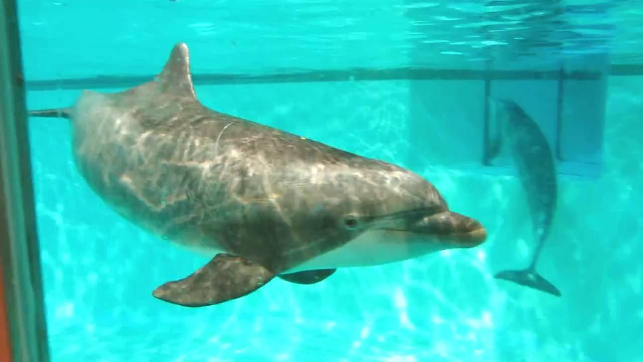 Särkänniemi Delfiinit