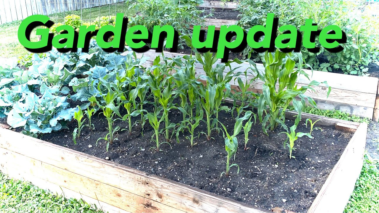 Shed wars-garden update and some potato knowledge