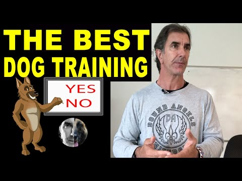 What is the Best Dog Training Method? Robert Cabral - Dog Training