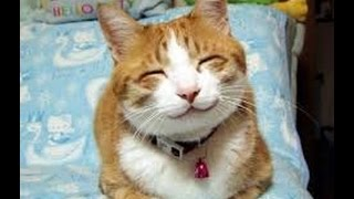 Кошачьи приколы: подборка#3