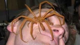 World's BIGGEST SPIDERS! Including the BIGGEST SPIDER in the world found alive!