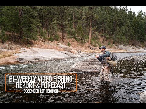 Bi-Weekly Video Fishing Report & Forecast - December 12th Edition
