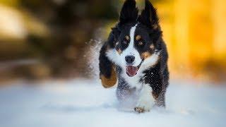 Собаки и первый снег. Собаки радуются снегу. Подборка 2017