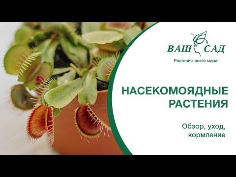 Вопрос: Как ухаживать за этим растением?