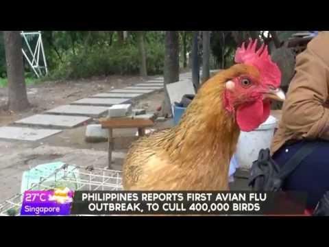 Agriculture Secretary Piñol confirms bird flu outbreak in San Luis, Pampanga